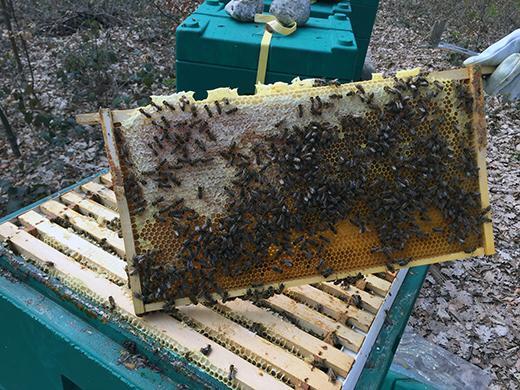Futterwabe aus einem Bienenstock